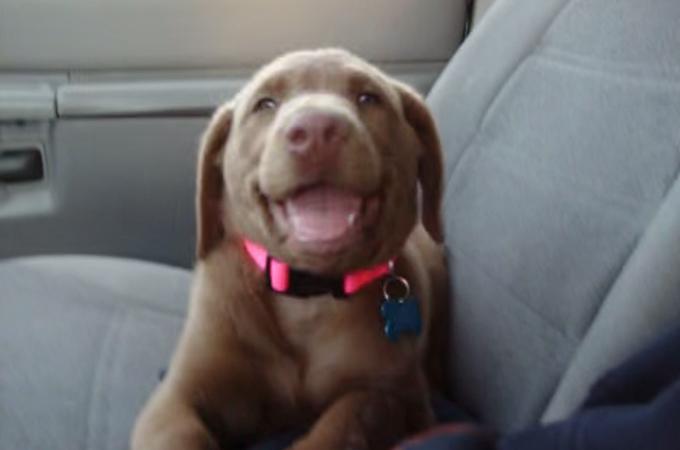 眠くてたまらないの。でも飼い主さんのこと大好きだから笑顔で答えちゃう子犬が可愛いすぎる