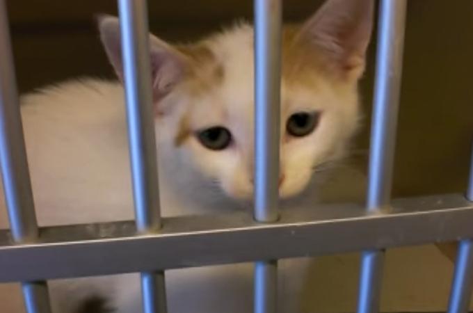 保護施設から連れて帰った子猫の表情に変化が!幸せな表情を浮かべる姿に涙