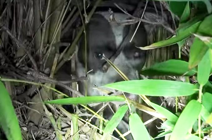 何かを守るため茂みの中から動こうとしない片目を失った犬。守ろうとしていた何かとはいったい…