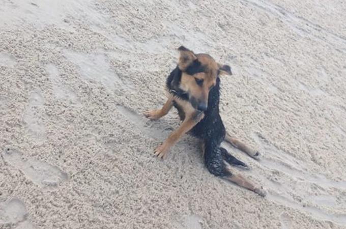 見捨てることなんて出来ない!旅先で下半身不随の犬を救った女性の行動力に心を打たれる