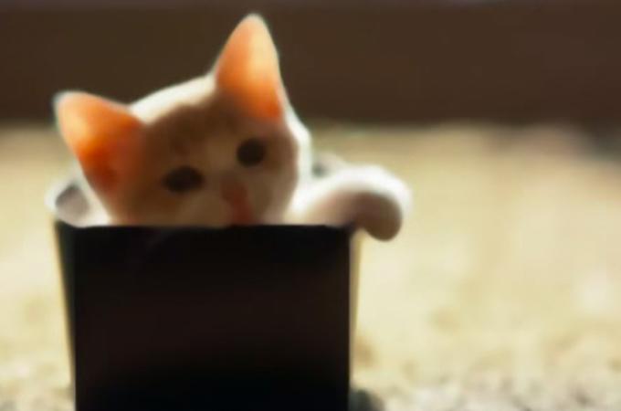嬉しそうに添い寝をする自分の死期を悟った愛猫にまつわる涙のお話