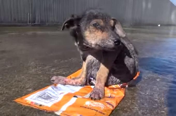 水路で身動きの取れなくなった3本足の子犬。救助され元気な姿を取り戻すまでの感動の記録映像