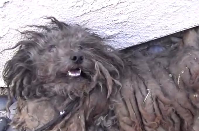 捨て犬が心を開いたのは優しい人の温もり!汚れたモップのような姿から笑顔を取り戻すまで