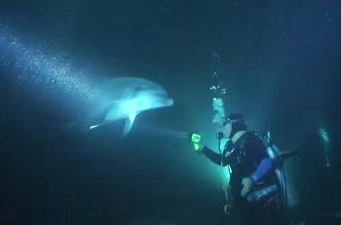 ワイヤーが巻きつき助けを求めるイルカとそれに応えるダイバーの奇跡の救出劇