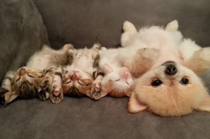 この可愛さは尋常じゃない!眠っている子猫たちを起こさないように固まる子犬に癒やされる