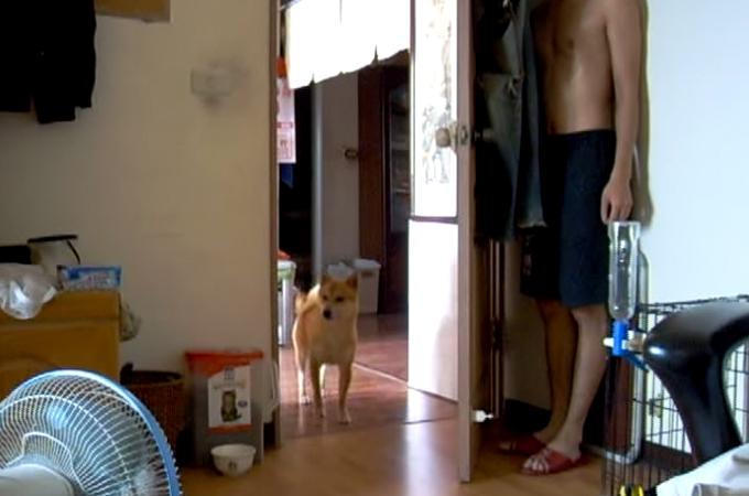 飼い主さんと仲良くかくれんぼする犬!飼い主さんを見つけた瞬間の反応が可愛すぎる