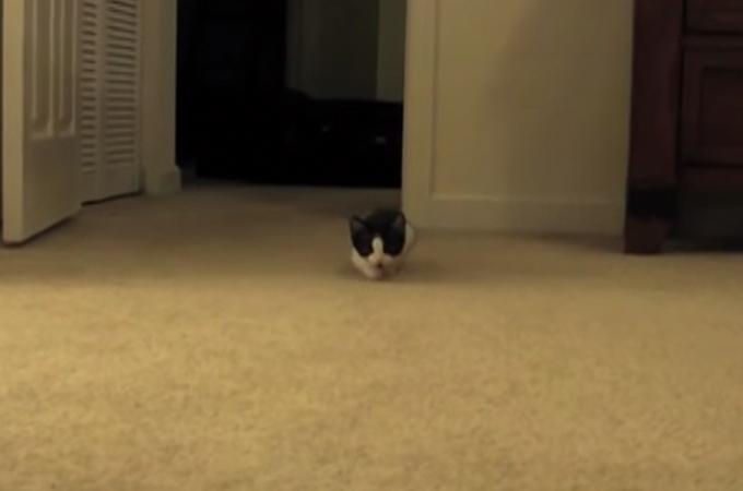 忍者子猫の抜き足、差し足、忍び足!可愛すぎるその姿に世界中が笑顔に