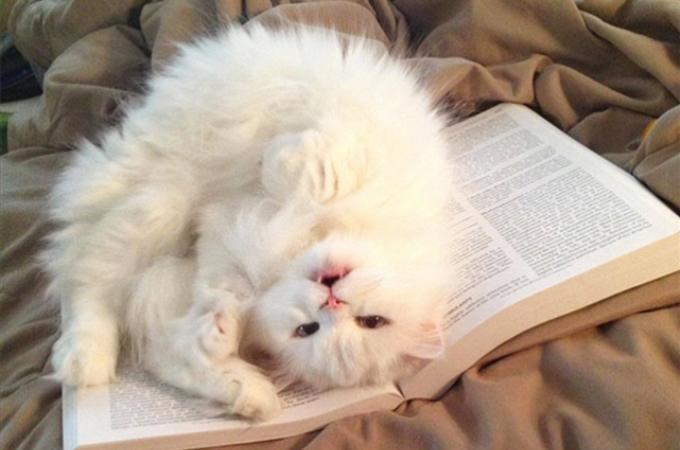 飼い主が読書や勉強を妨害しにくる可愛すぎる猫たち