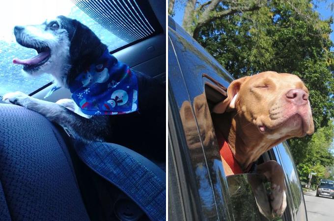 保護施設から新しい家族の元へ向う途中に見せた犬の表情27選