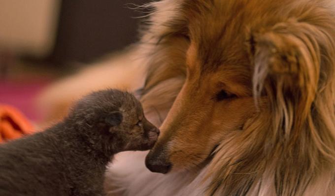 Картинки по запросу amour de petit chien