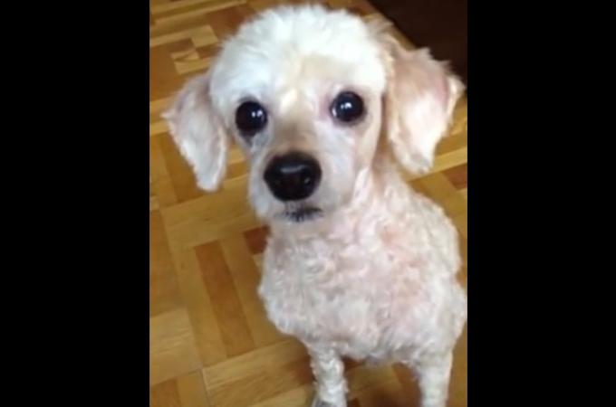 一つの小さな命がこうして助けられる!殺処分寸前で保護された犬が心を開くまで