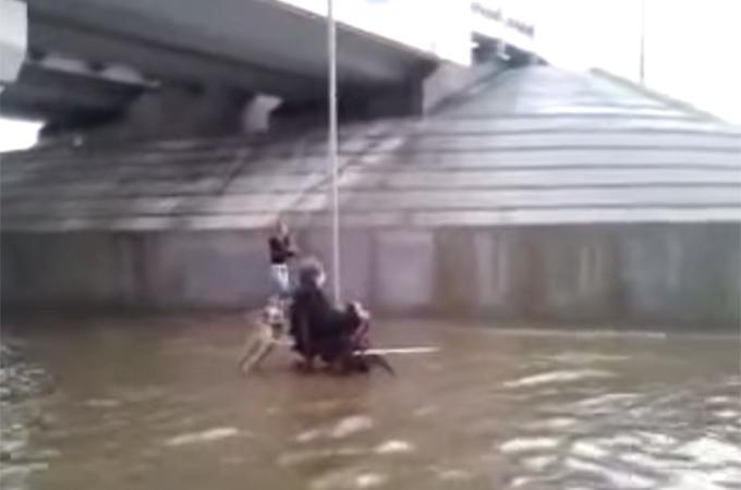 大洪水により浸水した道路で飼い主さんの車椅子を押し助ける犬に感動