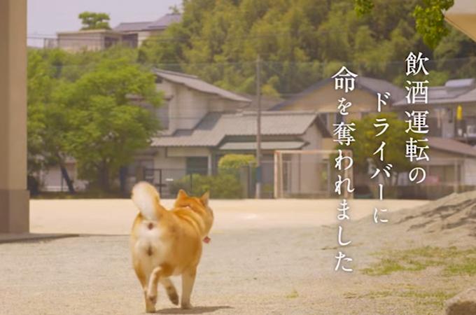 飲酒運転撲滅CM、亡くなった飼い主さんを想い待ち続ける愛犬の悲しい実話