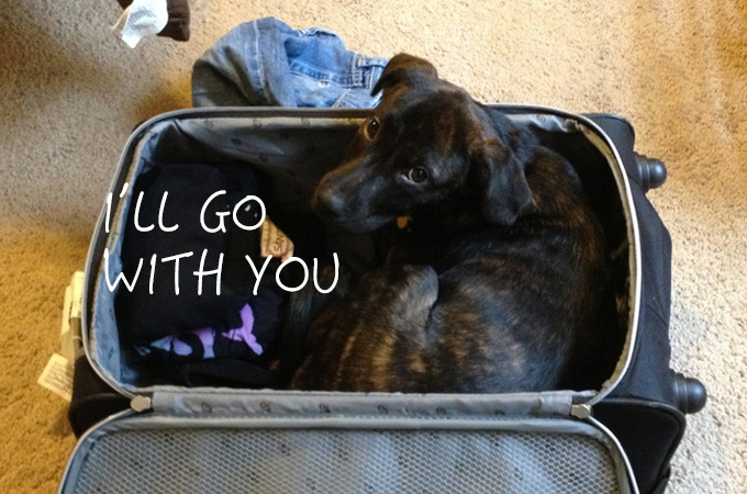 お出かけしようとする飼い主さんの気配をいち早く察知する犬や猫たちの画像