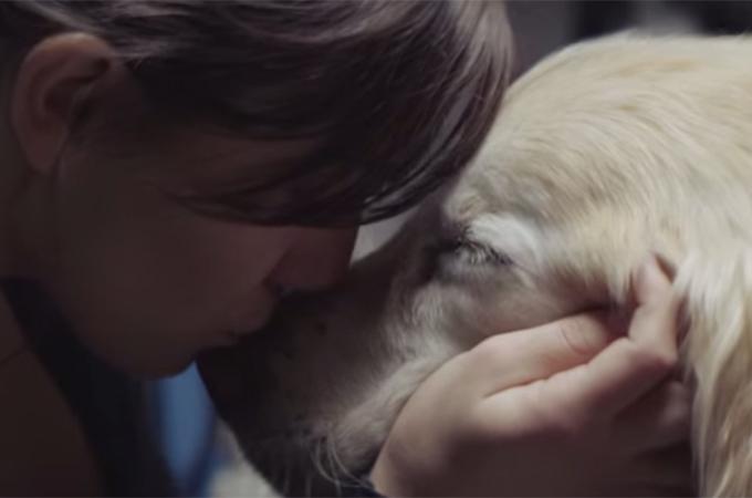 人生を共に旅した愛犬は最高の友!走馬灯のように駆け巡る涙のストーリー