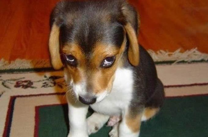 おそらく何かをやらかしたであろう犬たちの可愛い表情の画像28選