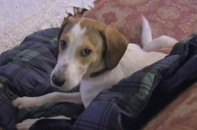 殺処分について考える!ガス室から奇跡の生還を果たした犬の動画