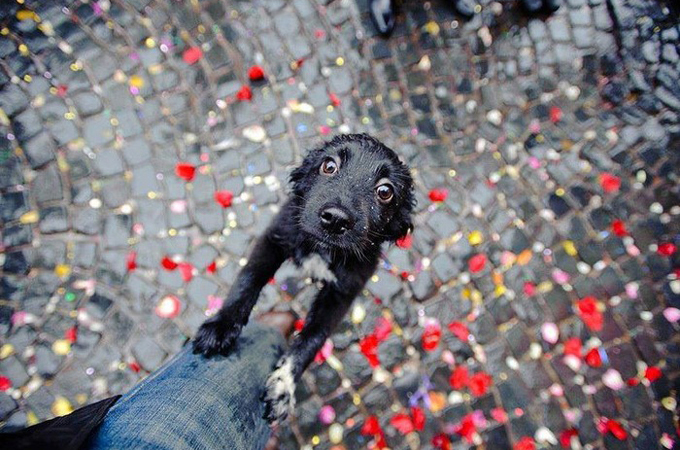 そんな目で見つめられたら放っておけない!何かをうったえる犬の画像38選