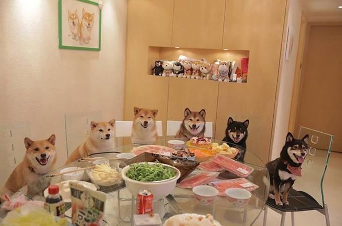 日本が誇る「柴犬」が海外でも大人気!可愛さを改めて実感する画像集