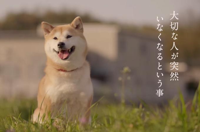 飲酒運転撲滅CM第二弾、飼い主さんの姿を今も探し続ける愛犬の悲しい実話