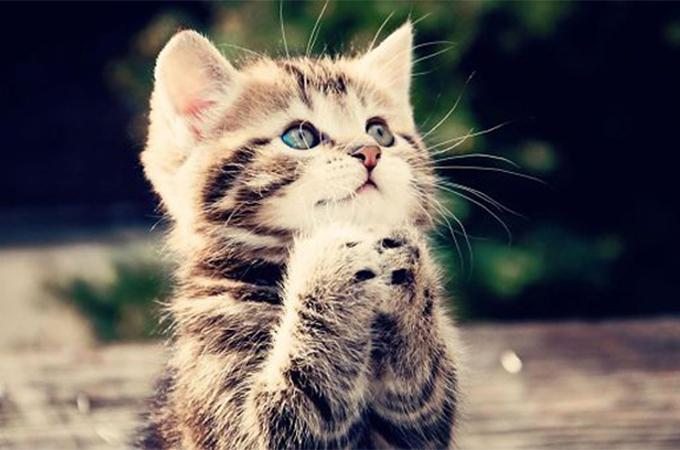 神様もメロメロ!透き通る目でお祈りする動物たちの癒し画像10選