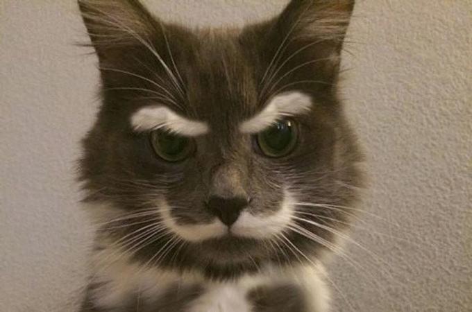 なんかごめんなさい!ご機嫌斜めな目力が凄すぎる表情の猫たち