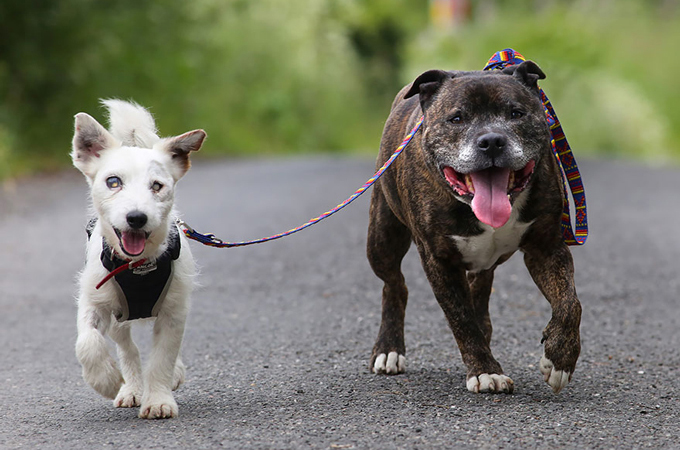 視力を失った友を支える!捨て犬同士の強い友情から私たちが学ぶこと