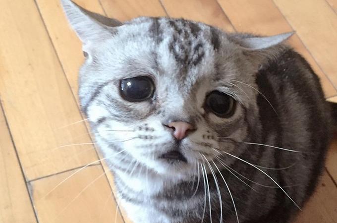 そんなに悲しまないで!どんなに楽しくても悲しい表情の猫が可愛い