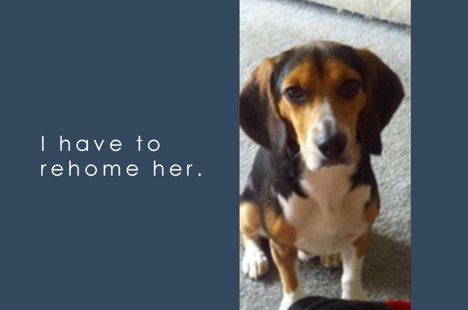 「僕の彼女は犬嫌いなので譲ります」男性の選んだこの行動が絶賛される理由とは?