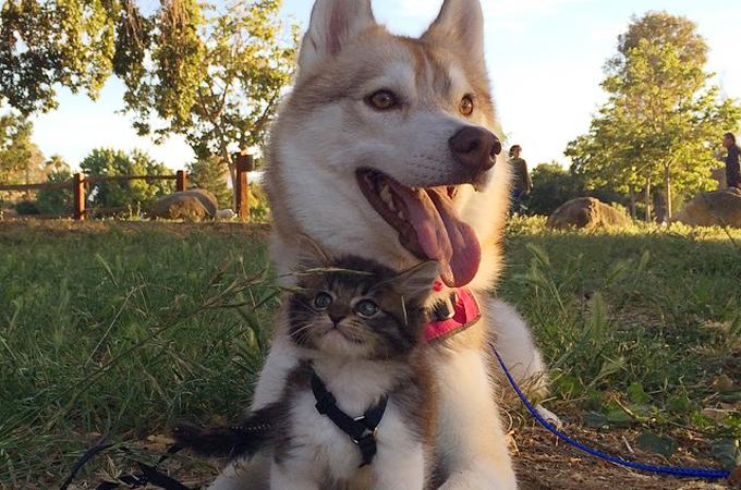 死の危機に瀕していた子猫を救ったのは心優しいシベリアンハスキー