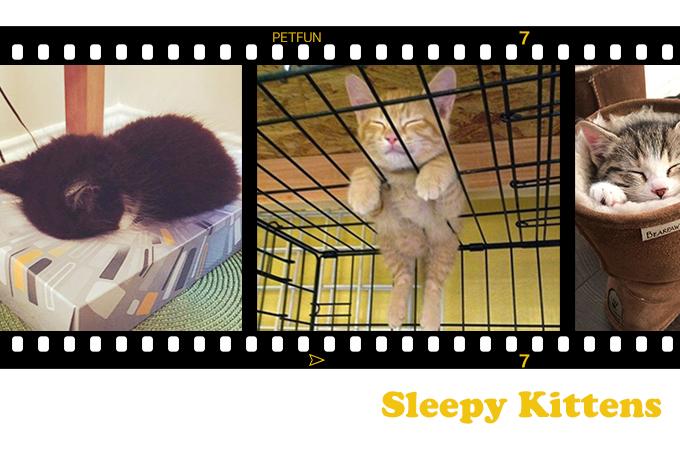 ウソでしょ!本当にそこが一番寝やすかったの?な猫たちの画像19選