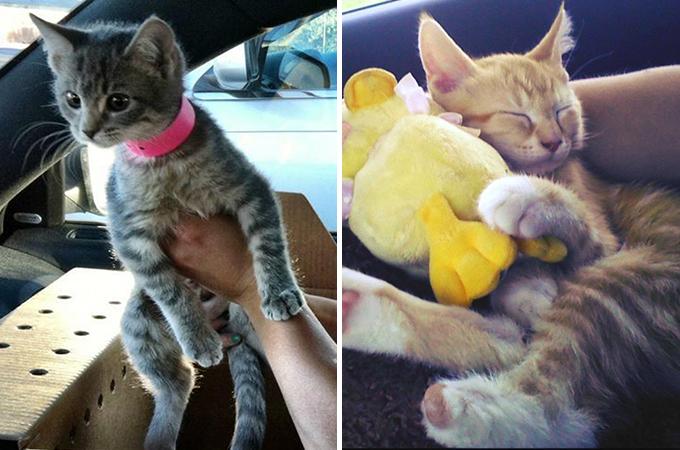 保護施設から新しい家族の元へ向う途中に見せた猫たちの表情15選