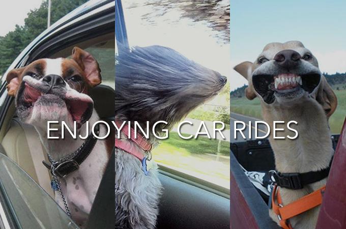 趣味は風になること!風を感じ、風を楽しむ犬たちのおもしろ顔画像集