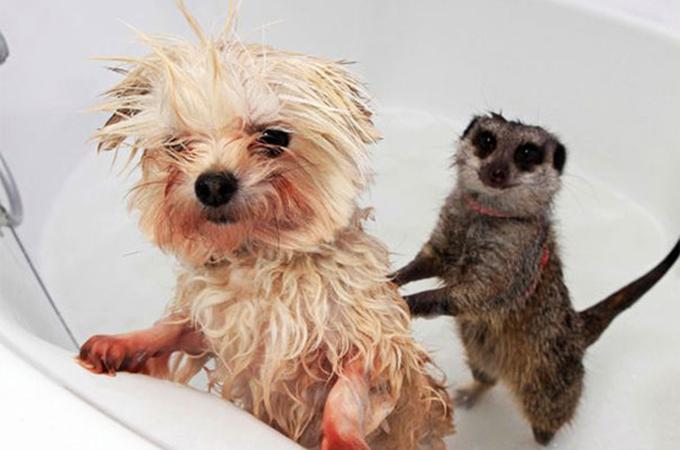 いい湯だな!お風呂大好き犬、猫たちの癒しの表情13選+gif