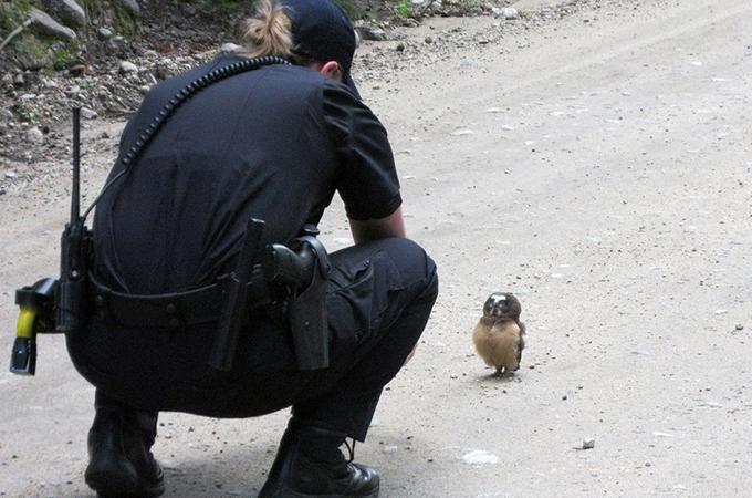 交通規則を守らないフクロウと警察官の可愛いすぎるにらみ合い