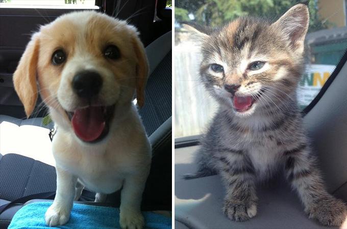 保護施設から迎えられた犬、猫たちの希望に満ち溢れた表情まとめ