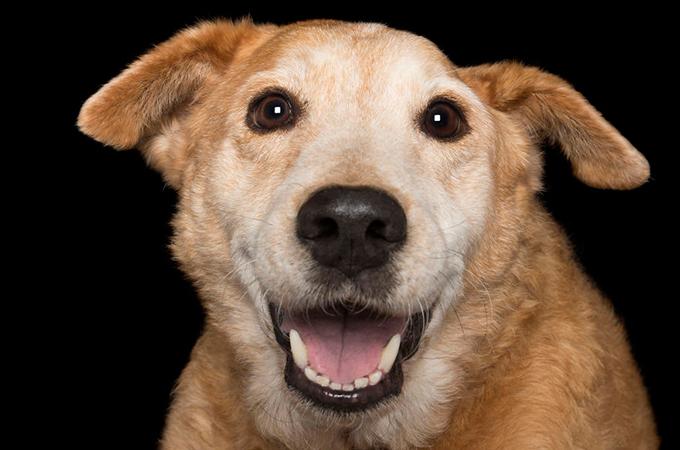 虐待をうけ体が不自由になり、逆境を乗り越えた犬や猫たちの美しい姿