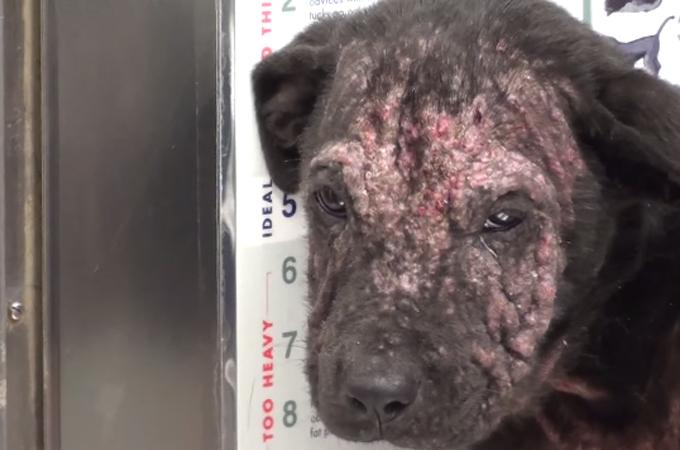 殺処分が決まっていた1匹のホームレスの子犬が輝きを取り戻すまで