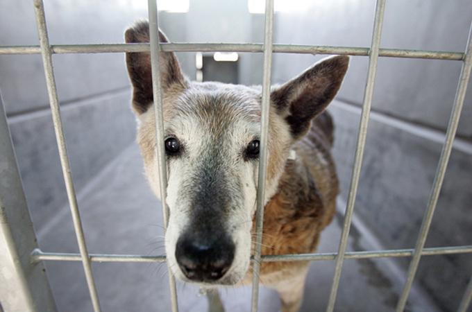 殺処分の対象とされていた犬たちを救うための素晴らしい法律が施行