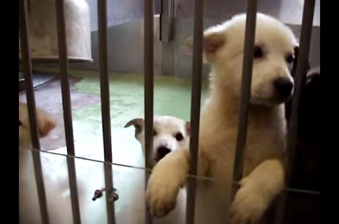 犬や猫の心の声や訴えに耳を傾けてほしい!助かる命はきっとある