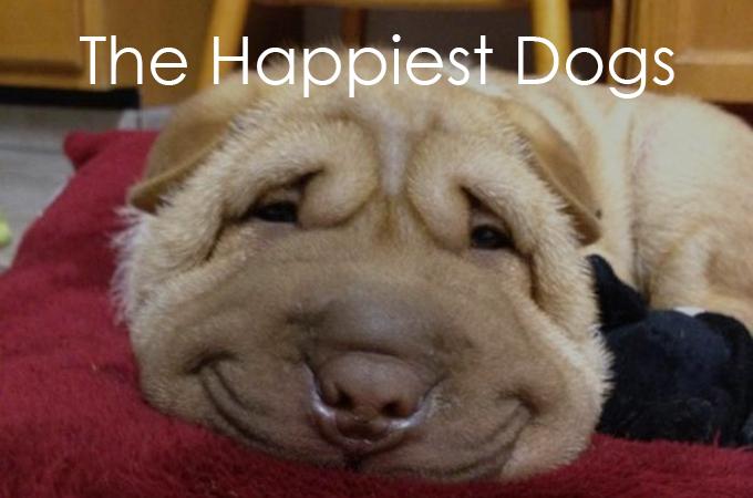 こんな素敵な笑顔を見せてくれる犬たちを私たちは傷つけてはいけない