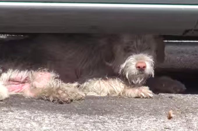 車の下で生活していたホームレス犬が保護される心あたたまる映像