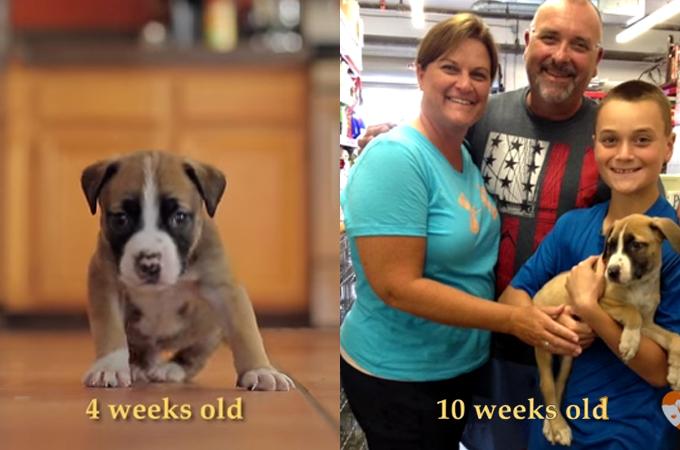母を亡くした10匹の子犬たちが最高のエンディングを迎える