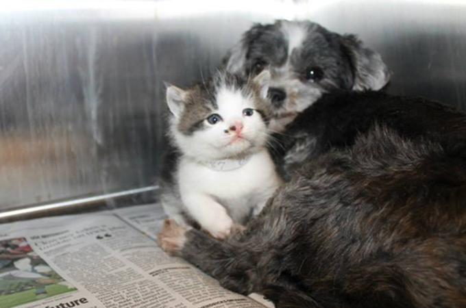 母乳を与え子猫を守り抜いた1匹の犬の行動に胸が熱くなる