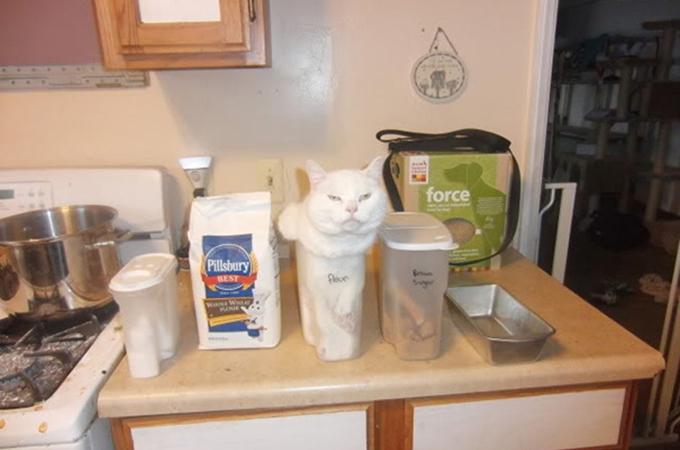 謎の行動が思わずキュンとなってしまうおもしろ猫画像15選