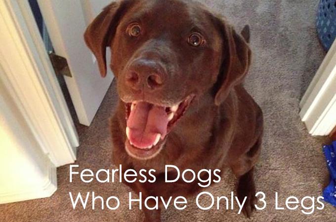 3本足と言う障害をものともしない犬たちが勇気をくれる画像21選