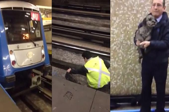 線路に迷い込んでしまった子犬を救った駅員さんの行動に心あたたまる