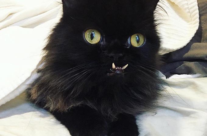 元野良猫が保護施設で新しい飼い主を待つ動物たちの勇気となる
