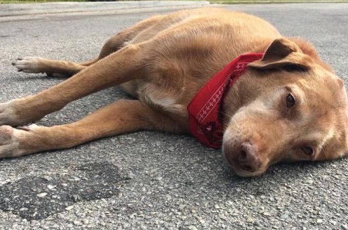 愛する飼い主さんを失ったその場を離れようとしない悲しい表情の犬