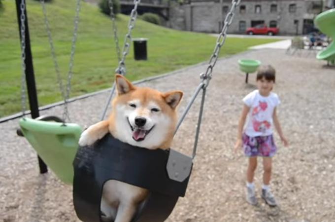 柴犬好きにはたまらない!少女と遊ぶ柴犬の表情が「反則級の可愛さ」